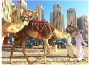 camel-beach-800x585
